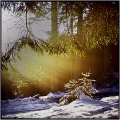 Winter light_Rolleiflex 3.5 (ksadjina) Tags: 6x6 austria fuji100rdpiii nikonsupercoolscan9000ed rolleiflex35 seewaldsee zeisstessar3575 analog film mood scan winter