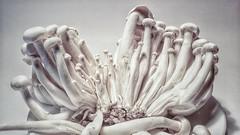 Shimeji (Marina Is) Tags: monochrome macromondays monocromático mushrooms setas hmm shimeji