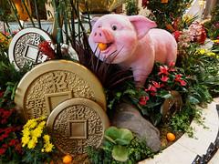 Last of the New Year pigs, I think (wirehead) Tags: em5mk2 918mm lasvegas palazzo pig newyear