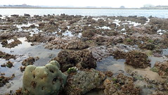 Living shores on Pulau Semakau (East) (wildsingapore) Tags: pulau semakau east landscape island singapore marine coastal intertidal shore seashore marinelife nature wildlife underwater wildsingapore