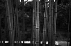 February 19, 2019_kyoto_28 (Satoshi Kondo) Tags: bw bnw blackandwhite blackandwhitephotography blackandwhitephoto bnwphoto bwphoto bnwphotography bwphotography blackandwhitepoto blackandwhitepotography monochrome filmphotography filmcamera filmphoto film filmpoto leica leicaphoto leicaworld leicam3 street streetphoto streetsnap streetphotography summicron summicron50mm kyoto japan 京都 白黒 フィルム フィルム写真 フィルムカメラ ライカ ライカm3 ズミクロン kodak