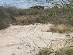 Pantano Wash Has Flowing Water (Chic Bee) Tags: nature pantanowash flowing water rain tucson arizona usa naturewalk flowingwater mountains sonorandesert catalinamountains tucsonvalley erosion