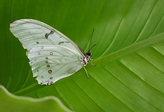 Butterfly (Geoff Fagan) Tags: butterfly butterflylover butterflymacro butterflymagic butterflies nature macro macrophotography closeup near macrodreams