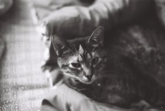 Lucy Pt. I (luke_coleman_film) Tags: cats blackandwhite bw 35mm film ilford125 ilford