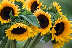 Let Some Sunshine In (ACEZandEIGHTZ) Tags: closeup nikon d3200 bokeh coth5 coth sunrays5 yellowyelloweverywhere
