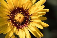 IMG_0791 Macro (Fernando Sa Rapita) Tags: baleares canon canoneos eos1300d mallorca sarapita sigma sigma105mm sigmalens macro naturaleza nature flower flor bug bicho