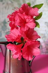azalea still life (debbfay) Tags: azaleas
