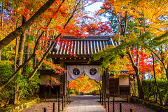 All-clear (johnshlau) Tags: allclear komyojitemple 光明寺 earliest early arriving visitor visitors crowds zen autumncolors vivid autumn colors redleaf red leaf leaves foliage kyoto japan garden temple buddhist entrance