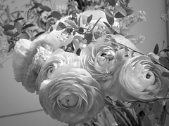 harada-flowers-72 (annie harada) Tags: flowers hana blumen fleurs bouquet noir et blanc black white