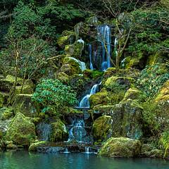 Garden thaw (docoverachiever) Tags: scenery oregon waterfall forest nature water winter landscape green portland cascade japanesegarden rocks
