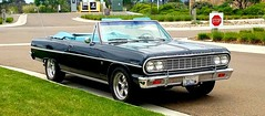 1964 Chevy Chevelle Convertible (mark1973r) Tags: 1964 gm chevy chevrolet chevelle convertable worldcars classic cruiser muscle auto automobile cat coche vehicle