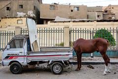 Cairo, Egypt (f.d. walker) Tags: africa cairo egypt middleeast horse headless truck car vehicle fence streetphotography street surreal candidphotography candid color colorphotography city mystery mysterious magic