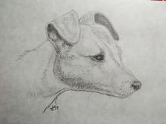 Vlekkie (Mattijsje) Tags: pencil drawing potlood tekening hond dog chien vlekkie jack russel head kop littledoglaughednoiret