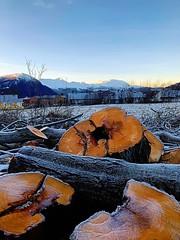 Stokker - Log life (erlingsi) Tags: logs stokker volda norge tømmer timber sunnmøre frozen frost frozenlogs