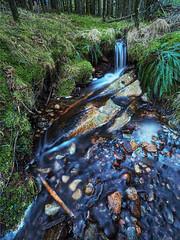 Forgetting Winter (SGarriott) Tags: sgarriott scottgarriott olympus omd 714mmf28 nature forest creek water flow rocks stream norway norge bekk vann skog vår spring