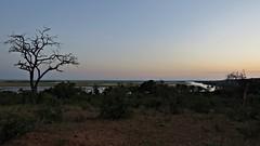 Sunrise at Botswana Chobe National Park (h0n3yb33z) Tags: botswana animals wildlife chobenationalpark sunrise africa