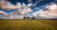 Wide open space (Phil-Gregory) Tags: nikon d7200 tokina1120mmatx tokina 1120mmproatx11 1120mm wideangle ultrawide scenicsnotjustlandscapes peakdistrictderbyshire trees sky cloudscape clouds grass ngc naturalphotography