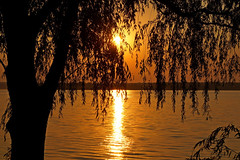 Willow at sunset (anna-82v) Tags: sunset evening river landscape nature summer dnieper tree willow
