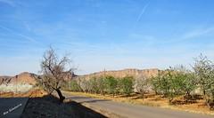 Tranquilidad en el paseo (kirru11) Tags: paseo camino ciruelos árboles almendros paisaje castillo peñas rocas cielo quel larioja españa kirru11 anaechebarria canonpowershot