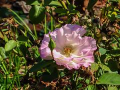 flor jardin del parque Campo del Moro Madrid 01 (Rafael Gomez - http://micamara.es) Tags: campodelmoro esp españa madrid flor jardin del parque campo moro