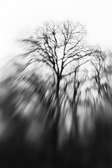 Capillaries (belleshaw) Tags: blackandwhite oakglen losriosrancho nature lensbabycomposer trees sky bare branches blur hike detail abstract