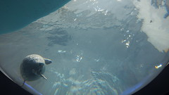 Osaka - Kyoto - Nara 25/3-30/3/2019 #cherryblossoms #aquarium #travel #osaka #kyoto  #nara  #japan #2019 (klok_01) Tags: cherryblossoms aquarium travel osaka kyoto nara japan 2019