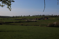 brill walk-190401-52.jpg (Phil Mercer-Kelly) Tags: sunshine spring radiooxford bbc counyryside blossom philmercer getactive brill sheep buckinghamshire europe england uk oxfordshire views bucks health windmill walker oakley walk