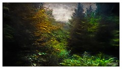 Unblemished (OATH Photography by Alison Richards) Tags: leaves trees forest woodland sparkle sparkling shadows lightanddark contrast green brown red painterly scotlandunitedkingdom