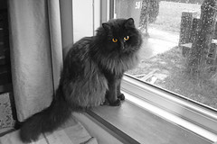 Reflections: whom I could to play with? (Caulker) Tags: vaska cat windowseal rain