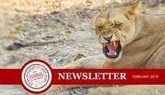 Africa Workshop (Trey Ratcliff) Tags: treyratcliff stuckincustoms stuckincustomscom africa madagascar botswana zimbabwe lion animal safari photography workshop nature