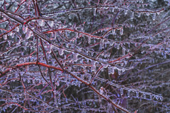 Icy Branches (Notley Hawkins) Tags: httpwwwnotleyhawkinscom notleyhawkinsphotography notley notleyhawkins 10thavenue ice icy twigs branches freeze cold icestorm dof depthoffield detail macro winter february 2019 missouri warmcool lightpainting lightpaint outdoors dusk evening red blue redlight bluelight redblue
