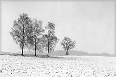 fomapan200_0005 (ekech) Tags: winter schnee snow analog analogue ishootfilm istillshootfilm buyfilmnotmegapixels largeformat grosformat 4x5 horseman45hd fomapan200 foma fomadonlqn landschaft landscape lausheim blackwhite monochrome schwarzweiss