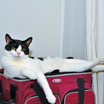 My wife's cat took over my fishing cooler as his lounger thumbnail