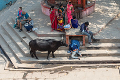 The Streets, Varanasi (Geraint Rowland Photography) Tags: poverty disabled amputee cow animal streetscene thestreets indianscenes indianstreetphotography tourism tourists indianclothing photography canon 50mm geraintrowlandphotography wwwgeraintrowlandcouk steps lookingdown perspective travelshotswanderlustmagazine