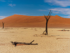 Dead Trees of Namibia (www.mikereidphotography.com) Tags: sossusvlei dunes namibia tree trees sand africa deadvlei fuji gfx50s contax 50mm
