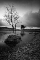 islands apart (akh1981) Tags: blackandwhite mono nikon nisi nature nisifilters nationalheritage nationalpark nationaltrust nationalheritagesite unesco travel trees tree uk outdoors cumbria clouds countryside walking wideangle water reflections tranquil tarn moody landscape lakedistrict sunrise sky hiking