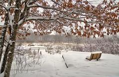 Snowy Day (The World of Photos) Tags: aoi elitegalleryaoi bestcapturesaoi