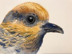 B202-365 one bird a day - Crazy Bird (2) (www.doortje.nl) Tags: