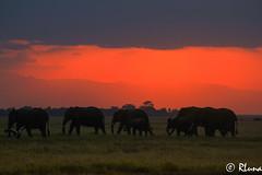AMBOSELI (RLuna (Instagram @rluna1982)) Tags: kenya africa fauna naturaleza elefante amboseli kilimanjaro safari todoterreno 4x4 viaje vacaciones holidays photo canon rluna rluna1982 karibu hakunamatata polepole wildlife sunset sunrise sun kenianairlines instagram spotlight instagramapp photography shadows silhouette igers igersmadrid atardecer ocaso puestadesol