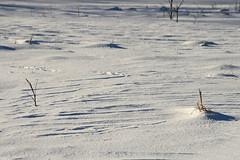 Lumi (Jaan Keinaste) Tags: pentax k3 pentaxk3 eesti estonia loodus nature talv winter lumi snow