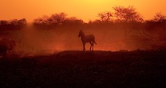 Dusk at the Water Hole (The Spirit of the World ( On and Off)) Tags: namibia etosha waterhole zebra wildlife nature trees sunlight light sunset dusk safari africa southernafrica dust landscape night shadows okaukuejocamp ngc