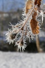 SK_2019-03-12_1060021 (Stephan_66) Tags: winter schnee eis eiskristalle eschachtal