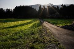 20190326a73_6427 (Gansan00) Tags: lce7m3 α7ⅲ sony zeiss japan 山口県 yamaguchi 日本 landscape snaps ブラリ旅 3月 錦町 菜の花