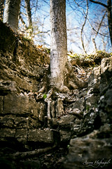Grow Anywhere (Aaron Hufnagel) Tags: nikon nikond600 d600 tokina tokina2870mm tokinaatx atx 2870mm madison madisonindiana cliftyfalls cliftyfallsstatepark indianastatepark statepark nature outdoor tree tress rock landscape