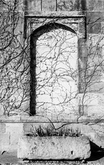 Planter and arch-climber (Richie Rue) Tags: ripley castle garden planter arch climber spring ivy monochrome blackandwhite bnw film analogue foma fomafomapan200 ishootfilm istillshootfilm filmsnotdead nikonf90 promicrol outdoors detail abstract mindfulphotography contemplativephotography historicbuilding travel tourism