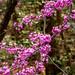 Spring 2019 Blooms (3)
