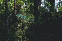 Canopy walk. (Andy @ Pang Ket Vui ( shootx2 )) Tags: canopy walk bridge green tree fujifilm x100f borneo bukit gemok sabah tawau nature