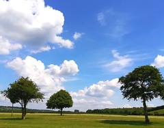 Summer landscape with trees, lawn and cloudy skies
