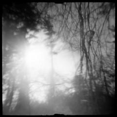 On Moon Hill #1 (LowerDarnley) Tags: traceflex dianaclone dianacamera plasticcamera expiredfilm agfaisopaniss topsfield ma moonhill baycircuittrail bradleypalmerstatepark trees sun branches