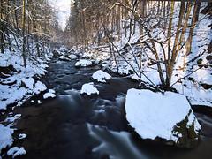 Wintersonne am Fluss (lebastian) Tags: fluss river winter bäume schnee langzeitbelichtung longexposure nd filter rolleifilter sächsische schweiz laowa7 5mm mft panasonic dmcgx8